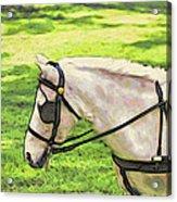 Carriage Pony Acrylic Print