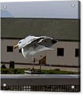 Cartoon - A Bird Perched On A Metal Post Getting Ready To Take Off Acrylic Print
