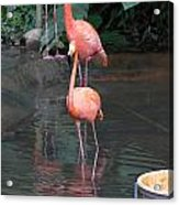 Cartoon - A Flamingo In The Small Lake In Their Exhibit In The Jurong Bird Park Acrylic Print