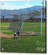 Cartoon Collection No 4 Life With A Border Collie In Usa Acrylic Print