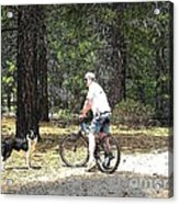Cartoon Collection No 45 Life With A Border Collie In Usa Acrylic Print