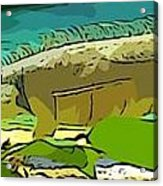 Cartoon Lizard Acrylic Print