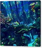 Casablanca Aquarium Close-up Acrylic Print