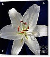 Casablanca White 0935 Acrylic Print