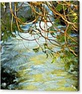 Cascade Cedar Acrylic Print