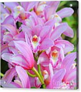 Cascade Of Pink Orchids Acrylic Print