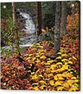 Cascade Creek  Autumn Acrylic Print