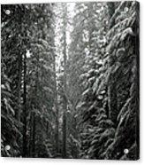 Cascade Snow Acrylic Print