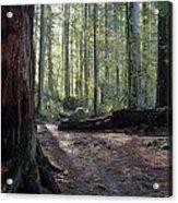 Cascades Forest Path Acrylic Print