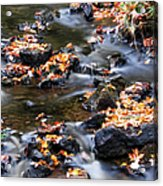 Cascading Autumn Leaves On The Miners River Acrylic Print