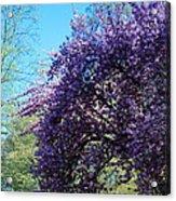 Cascading Flowers Acrylic Print