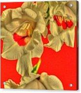Cascading Gladiolas Acrylic Print
