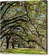 Cascading Oaks Acrylic Print