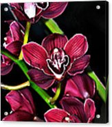 Cascading Red Orchids Acrylic Print