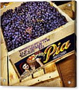 Case Of Sangiovese Grapes Acrylic Print