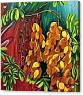 Cassia Acrylic Print