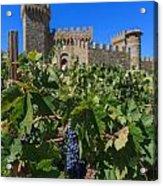 Ripe On The Vine Castelle Di Amorosa Acrylic Print