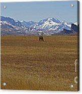 Castle Rock Horses   #8515 Acrylic Print