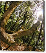 Castle Rock State Park Branch To The Sun Acrylic Print