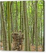 Castle Tree Stump Acrylic Print
