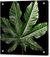 Castor Bean Leaf Acrylic Print