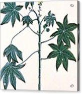 Castor Oil Plant Acrylic Print