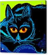 Cat-3 Acrylic Print