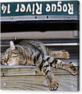 Cat And A Canoe Acrylic Print