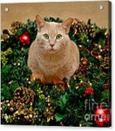 Cat And Christmas Wreath Acrylic Print