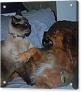 Cat And Dog Fight Acrylic Print