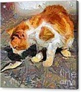 Cat  And Fish Acrylic Print
