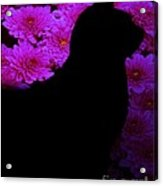 Cat And Flowers Midnight Silhouette Acrylic Print