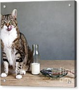 Cat And Herring Acrylic Print