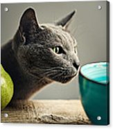 Cat and Pears Acrylic Print