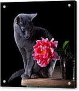 Cat And Tulip Acrylic Print