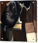 Cat At A Window With A View Acrylic Print