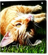 Cat At Play Acrylic Print by Jo Collins
