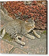 Cat At Wat Mahathat In 13th Century Sukhothai Historical Park-th Acrylic Print