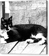 Cat Black And White Acrylic Print