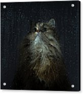 Cat By Rainy Window Acrylic Print