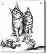 Cat Chips  Acrylic Print