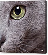 Cat Eye Acrylic Print