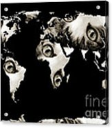 Cat Eyes World Map Acrylic Print