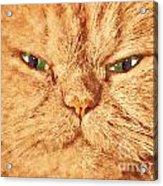 Cat Face Close Up Portrait. Painted Effect Acrylic Print