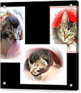 Cat Family Acrylic Print