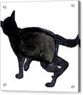 Cat I Acrylic Print