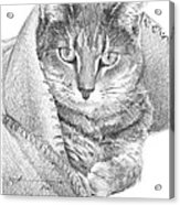 Cat In A Blanket Pencil Portrait  Acrylic Print