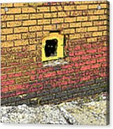 Cat In A Hole In A Wall Acrylic Print