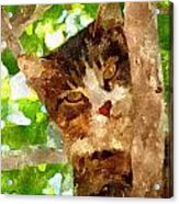 Cat In A Tree  Acrylic Print