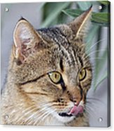 Cat In Athens Acrylic Print